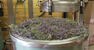 florihana-distillery-lavender